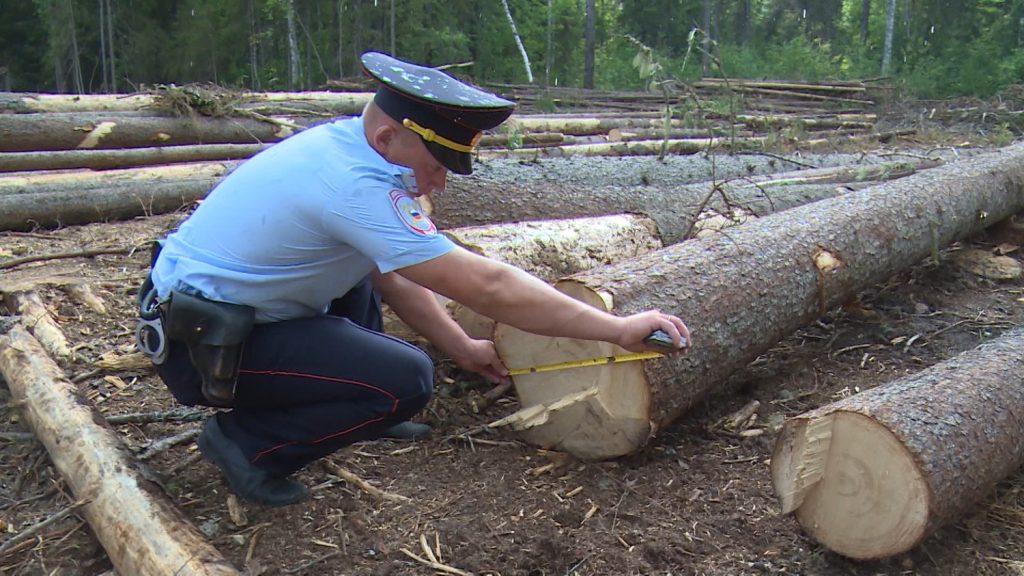 Увеличились санкции за уничтожение лесов
